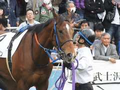 20161204 中山3R 2歳未勝利 メガポリゴン 12