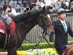 20141108 東京11R 京王杯2歳S マイネルグルマン 10