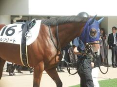 20190928 中山5R 2歳牝馬メイクデビュー アルソリート 08