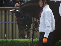 20181118 東京5R 2歳メイクデビュー ショウナンサジン 07