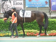 20190518 東京7R (500) ラプターゲイル 04