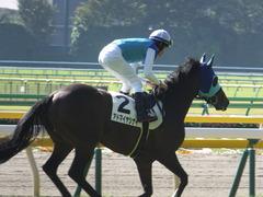 20161105 東京4R 2歳未勝利 アドマイヤシナイ 17