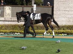 20150131 東京2R 3歳未勝利 コスモポッポ 02