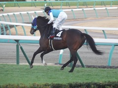 20181228 中山12R (1000) アドマイヤシナイ 18