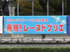 20151123 東京10R 鷹巣山特別 レーヌドブリエ 01