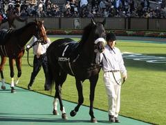20131117 東京 ショウナンアチーヴ 08