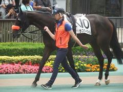 20190601 東京7R 3歳牝馬1勝 ラプターゲイル 03
