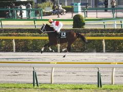 20141116 東京10R ショウナンアポロン 10