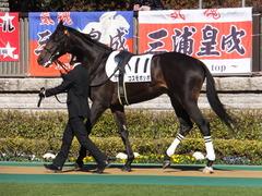 20150131 東京2R 3歳未勝利 コスモポッポ 04