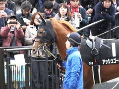 20151129 東京10R ウェルカムS アッシュゴールド 02