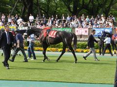 20140503 東京11R 青葉賞 ショウナンラグーン 11