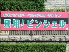 20181007 東京5R  2歳メイクデビュー ピンシェル 01