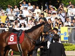 20140921 新潟11R セントライト記念 オウケンブラック 08