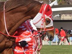 20170114 京都10R 北大路特別 4歳上牝馬1000万下 レーヌドブリエ 12