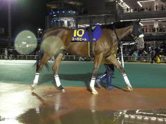 20141127 大井11R 勝島王冠(S3) ユーロビート 05