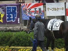 20141012 東京4R ウインメアリー 03
