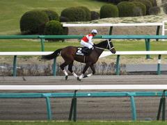 20150321 中山10R 韓国馬事会杯 ショウナンアポロン  13