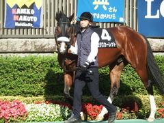 20181125 東京8R オリエンタル賞(1000) ロジスカーレット 07