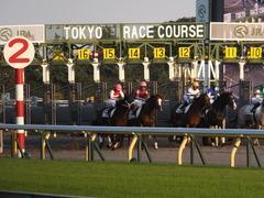 20141018 東京12R ショウナンアポロン 13