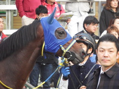 20181202 中山12R (1000) ラッシュアタック 13