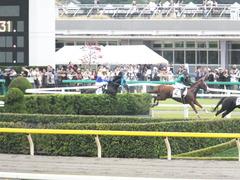 20151010 東京4R 3歳上障害未勝利 サウンドアラムシャ 11