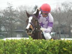 20190323 中山9R ミモザ賞 3歳牝馬(500) トロハ 17