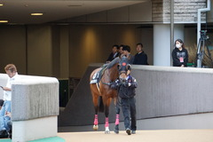 20191124 東京10R ウェルカムS (3勝) オウケンブラック 01