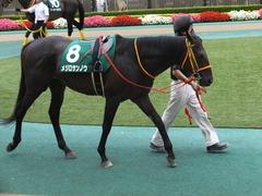 20150627 東京8R 東京JS(JG3) メジロサンノウ 06
