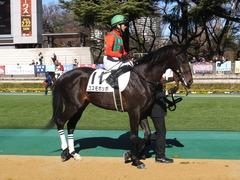 20150131 東京2R 3歳未勝利 コスモポッポ 11