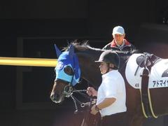 20161105 東京4R 2歳未勝利 アドマイヤシナイ 06