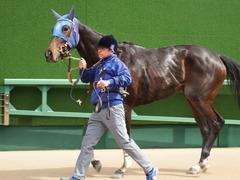 20180318 中山1R 3歳牝馬未勝利 ラプターゲイル 18