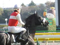 20131117 東京 ショウナンアチーヴ 13