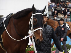 20150321 中山10R 韓国馬事会杯 ショウナンアポロン  05