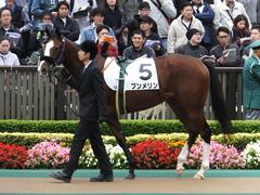 20161030 東京1R 2歳未勝利 プンメリン 03