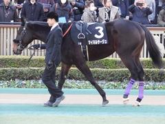20180127 東京11R 白富士S(OP) マイネルサージュ 11