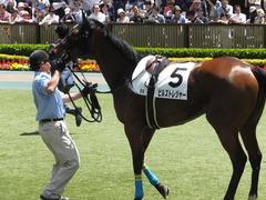 20170506 東京5R 3歳牝馬500万下 ビルズトレジャー 13