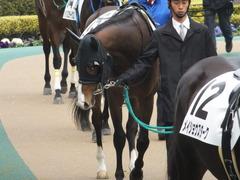 20150222 東京4R 3歳未勝利 ロジダーリング 03