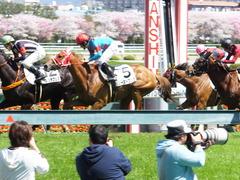 20150404 阪神4R 3歳未勝利 レーヌドブリエ 16