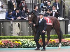 20141108 東京11R 京王杯2歳S マイネルグルマン 02