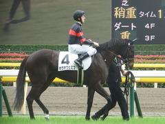 20190608 東京6R 3歳牝馬未勝利 ホウオウヒミコ 17