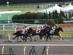 20141025 東京12R ゴールウェイ 14