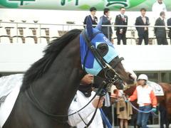 20190323 中山7R (500) アドマイヤムテキ 11