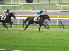 20141130 東京3R 2歳未勝利 トーセンカナロア 14