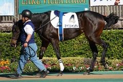 20191110 東京2R 2歳牝馬未勝利 ミヤコシャンティ 03