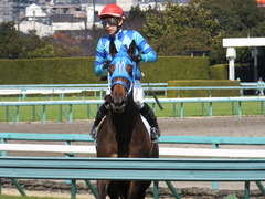 20170225 阪神4R 3歳未勝利 サテンドール 23