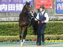 20190216 東京9R フリージア賞 3歳500万下 ホウオウサーベル 09