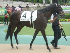 20190608 東京6R 3歳牝馬未勝利 ホウオウヒミコ 11