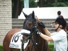 20180616 東京6R 3歳未勝利 ロジスカーレット 16