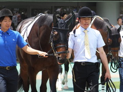 20150620 東京5R 2歳メイクデビュー  プロディカルサン 06