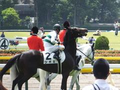 20160514 東京5R 3歳牝馬未勝利 ツボミ 19